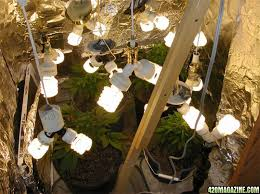 Best 25 Marijuana Grow Lights by What Are Compact Fluorescents And How Can I Use Them For Growing