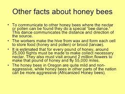 honey bee presentation final