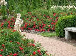 26 best flower carpet scarlet groundcover rose images on pinterest
