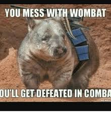 Wombat Memes - you mess with wombat ou ll get defeated in comba wombat meme on