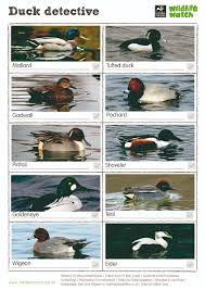 wildlife watch spotting sheets