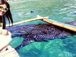 amazing private beach house crystal clear water whale shark
