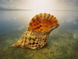 colorful pictures of seashells seashells wallpaper seashells