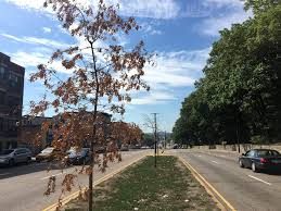 how the drought is affecting boston trees morning edition