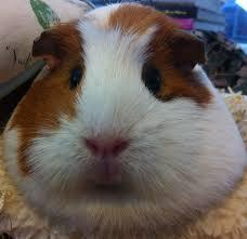 vote cutest pet itwixie