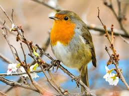 more than 800 000 songbirds illegally killed u0027 on british military