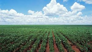 plants native to brazil the slow death of brazil u0027s cerrado ecology u0027s birthplace