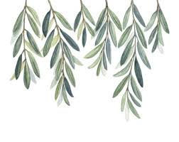 Branch Decor Olive Branch Etsy