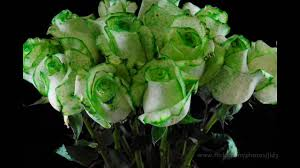 green roses the project v2