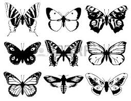 set of butterflies silhouette with open wings royalty free