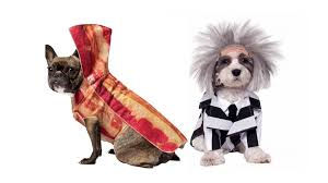 Dogs Halloween Costumes 27 Funniest Pet Halloween Costumes Today