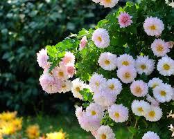 pretty flower garden ideas garden ideas beautiful flower designs gardens best images about on