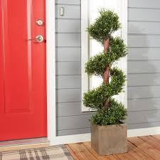 romano 4 foot indoor outdoor boxwood spiral tree free shipping