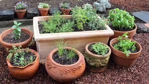 growing herbs indoors for beginners kitchen garden design ideas