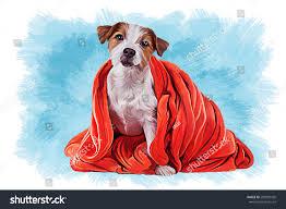 australian shepherd jack russell terrier drawing dog jack russell terrier red stock illustration 282905435