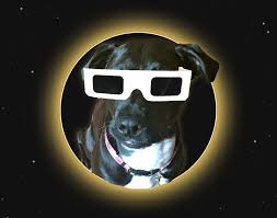 Does Looking At An Eclipse Blind You Can The Solar Eclipse Blind Your Pet