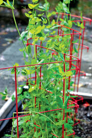 expandable pea trellis gardener u0027s supply