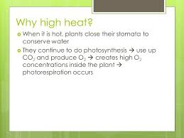 High Heat Plants Photosynthesis Ppt Download