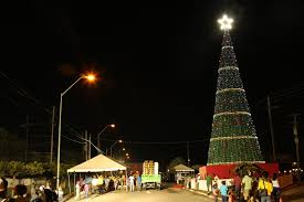 tree lit up at rahaman s park stabroek news