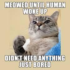 Success Cat Meme - great success imgur