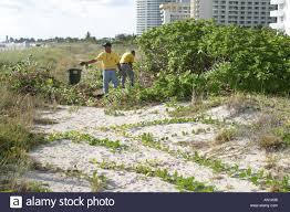 fl native plants miami beach florida city remove non native plants from manmade