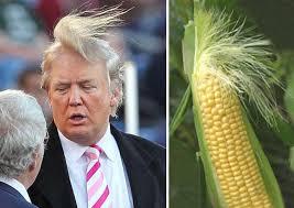 Donald Trump Meme - 11 best donald trump memes