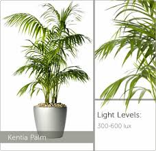 low light plants for office low light plants live plants for offices ambius uk direct sunlight