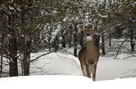 dnr warm dry weather can trigger wildlife diseases