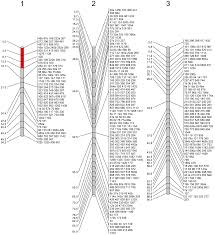 Genetic Map Assembly Of The Genome Of The Disease Vector Aedes Aegypti Onto A