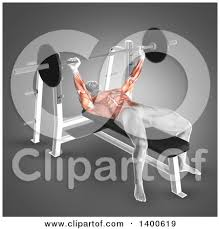 Muscles Used When Bench Pressing Royalty Free Rf Bench Press Clipart Illustrations Vector