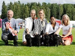 affenpinscher uppf are örebro läns kennelklubb u003cbr u003enationell hundutställning 2015