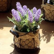 compare prices on lavender decorations online shopping buy low