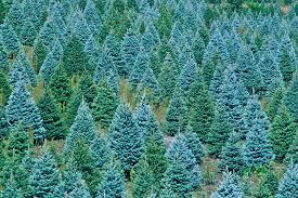 trendy inspiration christmas tree farms nice design asheville nc