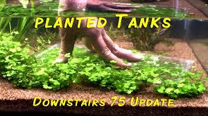 How To Aquascape A Planted Tank Aquascaping U2013 Ted U0027s Fishroom