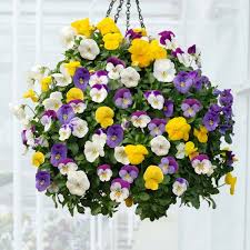 flower baskets pro tips for amazing hanging flower baskets