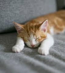 Why Does My Cat Sleep On My Bed 9 Things That Cats Like