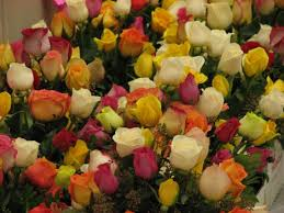 ship flowers cruise ships and flowers cruise buzz