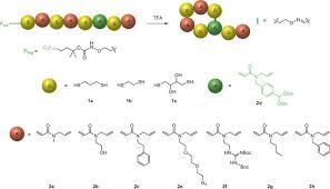 Light Independent Reactions Definition Sequence Defined Bioactive Macrocycles Via An Acid Catalysed