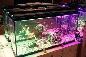submersible led aquarium lights light aquarium submersible aquarium light led sportymom me