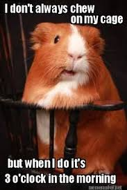 Meme Generator I Don T Always - meme maker i don t always chew on my cage but when i do it s 3 o