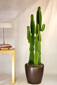 best 25 indoor cactus plants ideas on pinterest indoor cactus