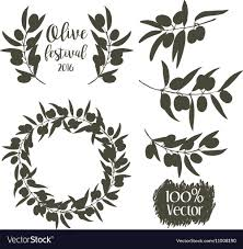 sketch of olive tree branch royalty free vector image