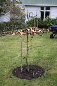 planting a tree in your garden