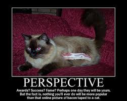 Success Cat Meme - 25 inspirational cat motivators smosh