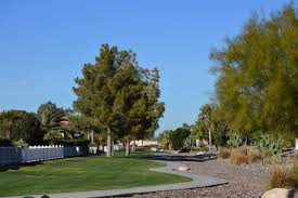 sun lakes cottonwood palo verde country club the kolb team