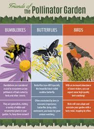 native plant species native plants and the pollinator garden fix com