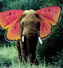 elephants pretty butterflies naturely