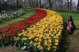 roll out flower garden through may 16 keukenhof gardens rolls out the flower carpet