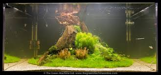 Most Beautiful Aquascapes Nature U0027s Chaos U0027 Aquascape Plant Package The Green Machine