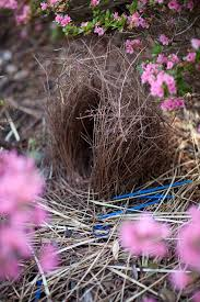 296 best nest images on pinterest animals beautiful birds and
